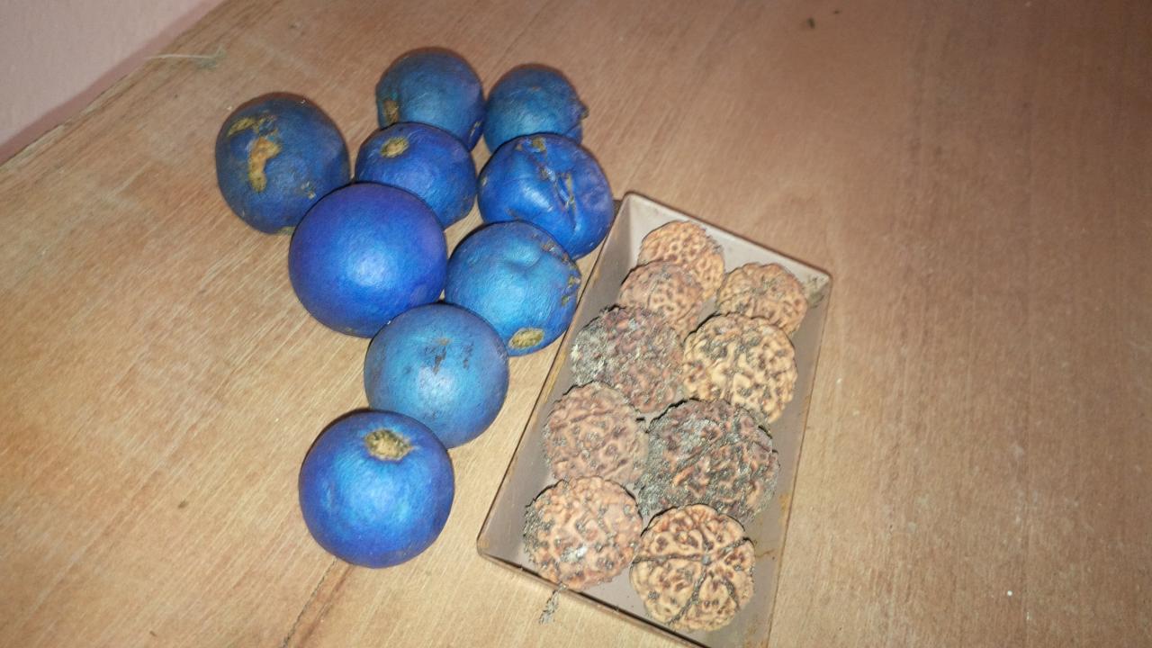graines bleues ou graine de Shiva.... à découvrir !